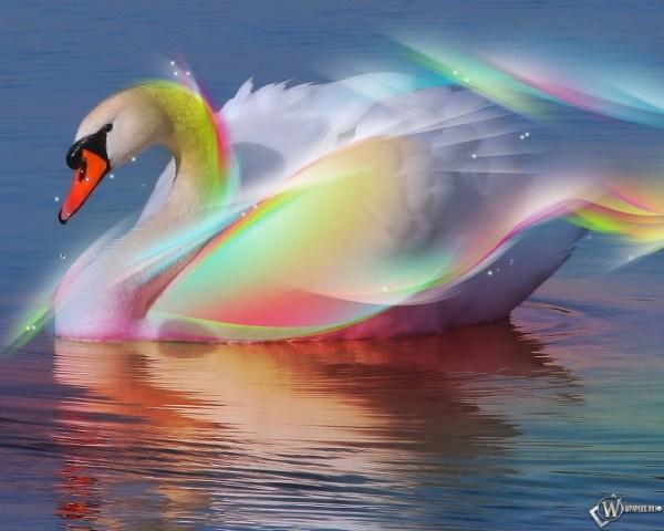 Скачать обои Радужный лебедь (Вода, Радуга, Лебедь) для ...