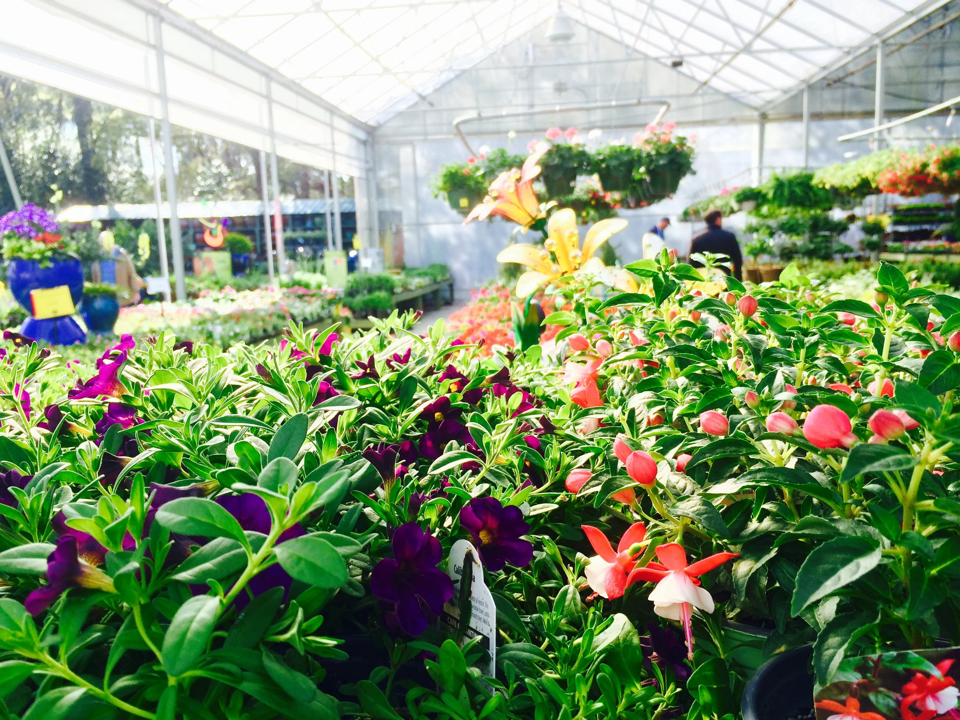 pike nurseries is opening a new
