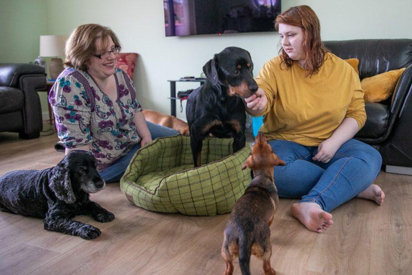 KCes Emma Gray Lost Dog Returned Dundee 11.01.21 15 37478589