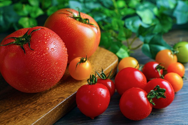 Everything you wanted to know about growing tomatoes in your garden