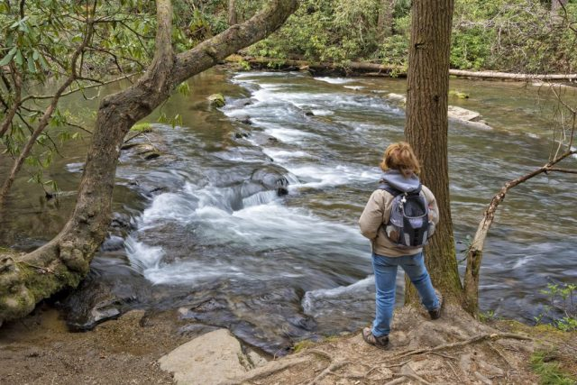 Smoky Mountain hiking trails