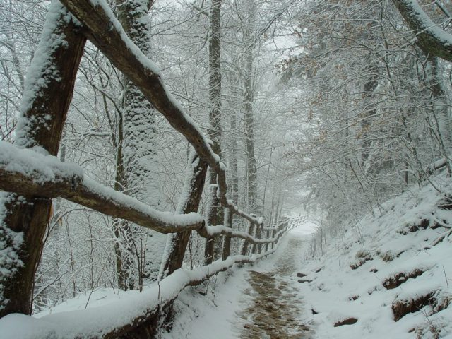 Snow on a hiking trail and fence posts in the Smoky Mountains
