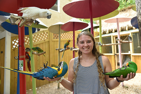 A girl holding parrots in her hands