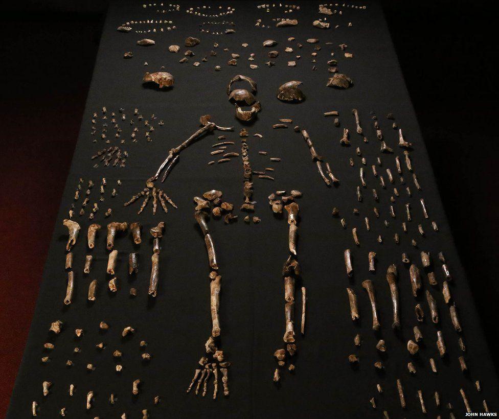 homo-naledi-bone-table-vertical-john-hawks-cc-by