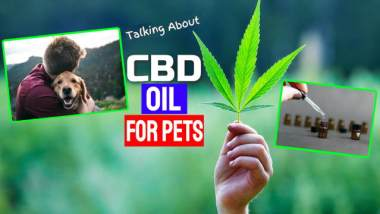 "Featured image for this article contains the text: ""Talking About CBD Oil for Pets""."