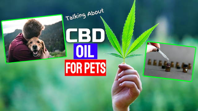 """Featured image for this article contains the text: """"Talking About CBD Oil for Pets""""."""