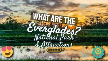 "Featured image text: ""What are the Everglades?"""