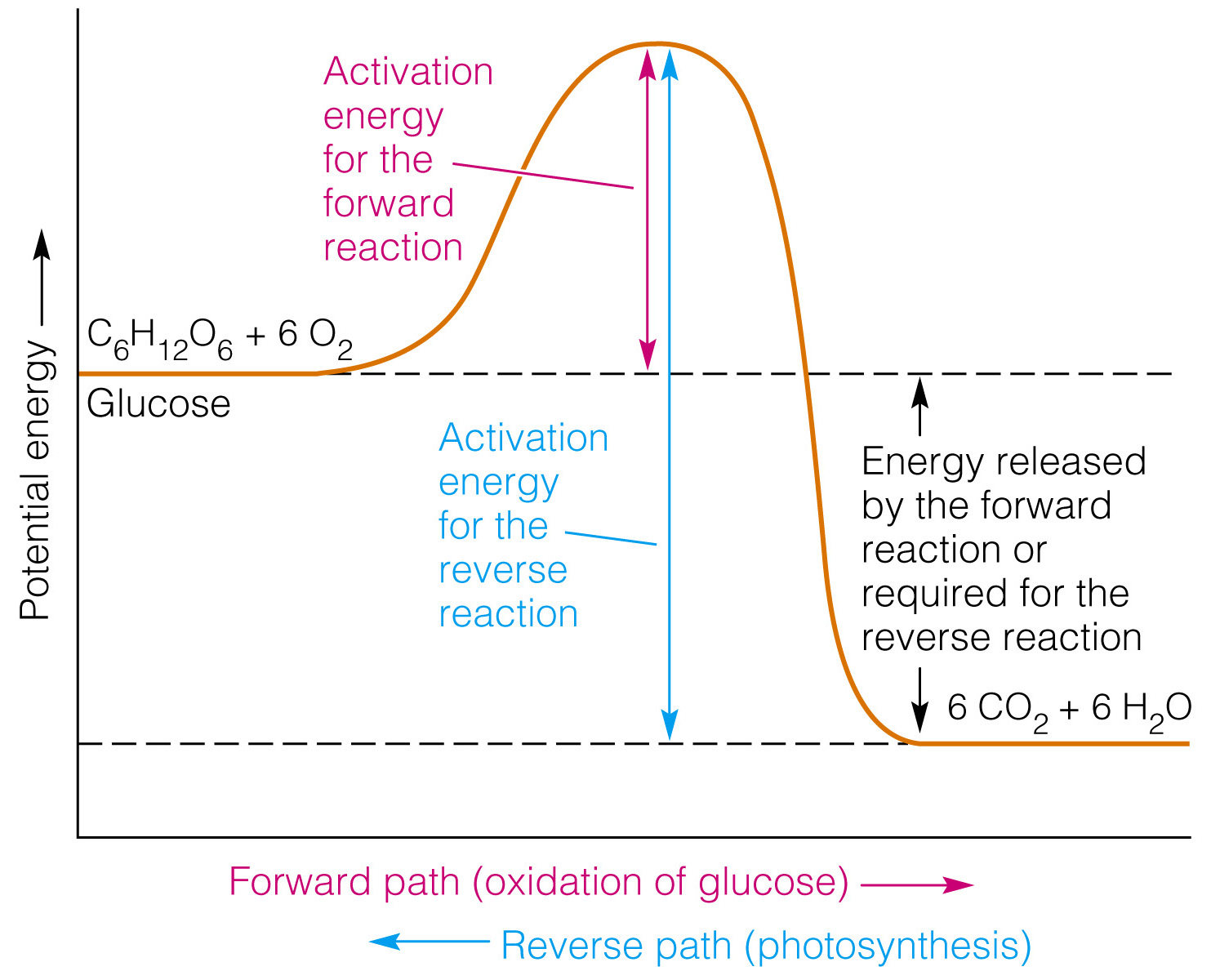 Activation Energy Diagram Endothermic Reaction Pictures To