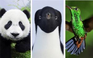 Penguin, Panda, Hummingbird - Google SEO algorithm updates