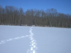 tracks-in-snow-converge