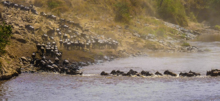Wildebeest migration | WordPress site migration
