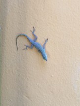 These Lizards Are Everywhere
