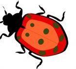 Report WordPress bugs