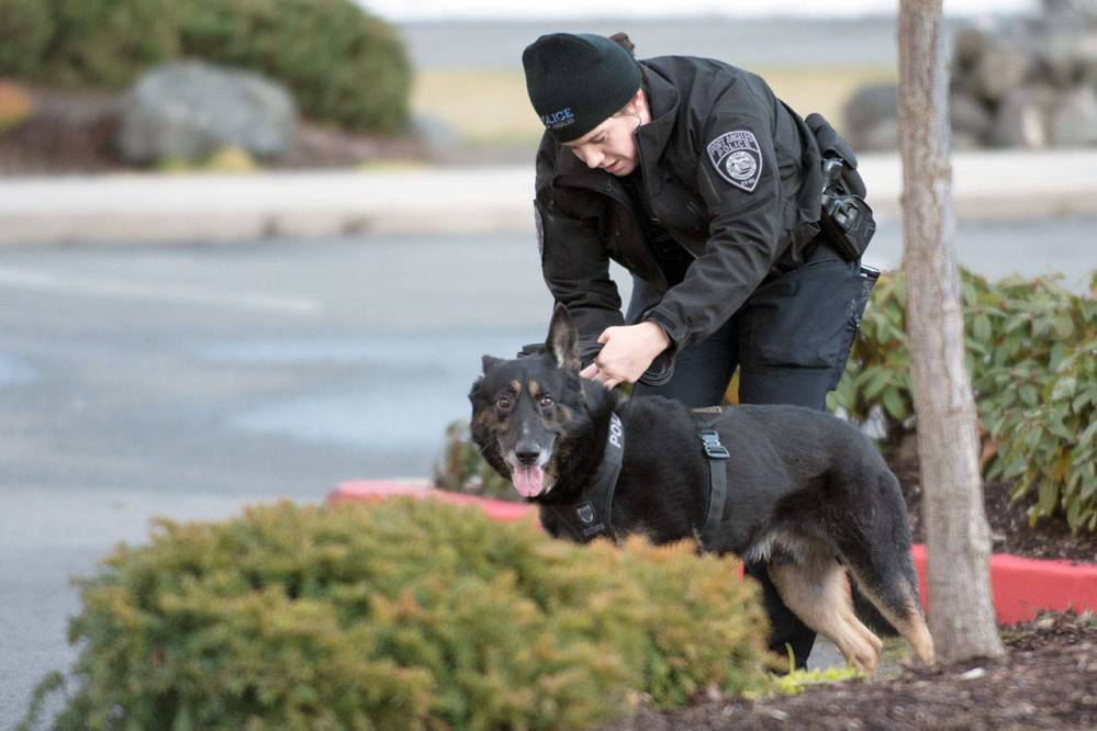 Port Angeles Police Officer Whitney Fairbanks works with Police Service Dog Bogey in Sequim on Sunday. (Jesse Major/Peninsula Daily News)