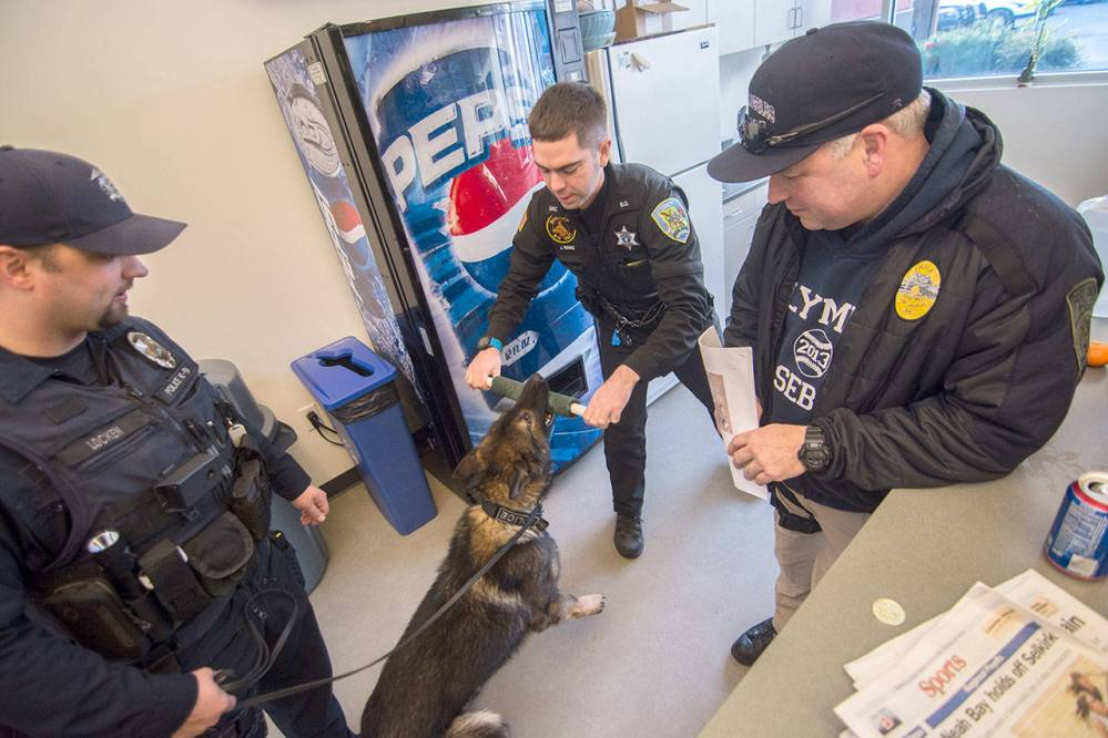 From left, Olympia Police Department Officer Levy Locken, Grays Harbor Sheriff's Deputy Justin Rivas and Port Angeles Police Department Sgt. Kevin Miller, interact with Police Service Dog Cooper before starting training in Sequim on Sunday. (Jesse Major/Peninsula Daily News)