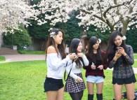 CherryBlossoms_5