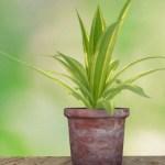 3D材質練習-逆光植物