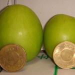 【高】燕巢名產「棗子」-2010年來買新鮮香甜又現採的棗子喔。