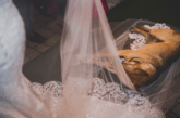 A Stray Dog Crashed a Wedding, So the Couple Adopted It
