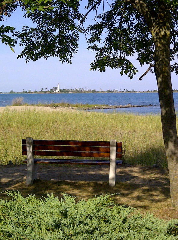 A Shoreline View