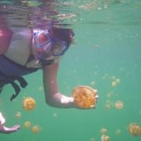 Secret Jellyfish World