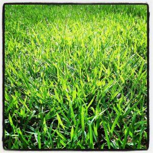 Image, green grass.