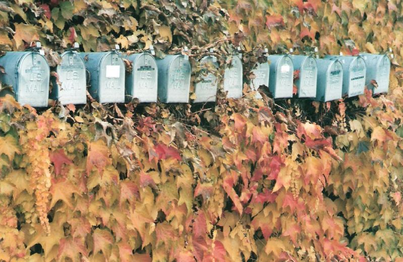 Image, Mailboxes in ivy.
