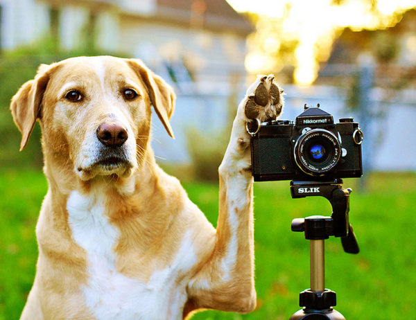 Image, dog with paw on camera.