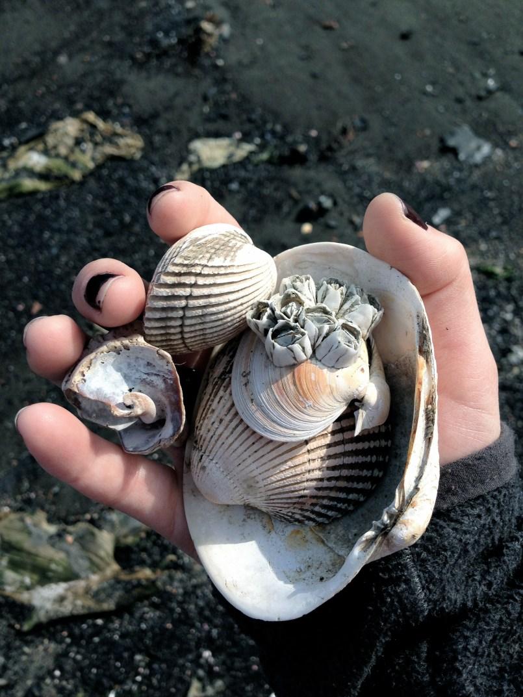 barnacle shells