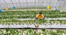 digital agriculture food security blockchain
