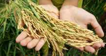 mena food security challenges governments