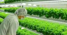 food webinar vertical farming supply