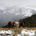 Elk Hunt on Bear Wallow Ridge
