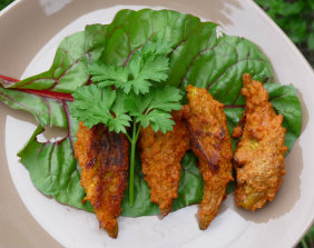 milkweed-fried