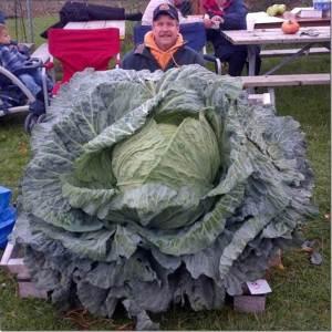 bigcabbage