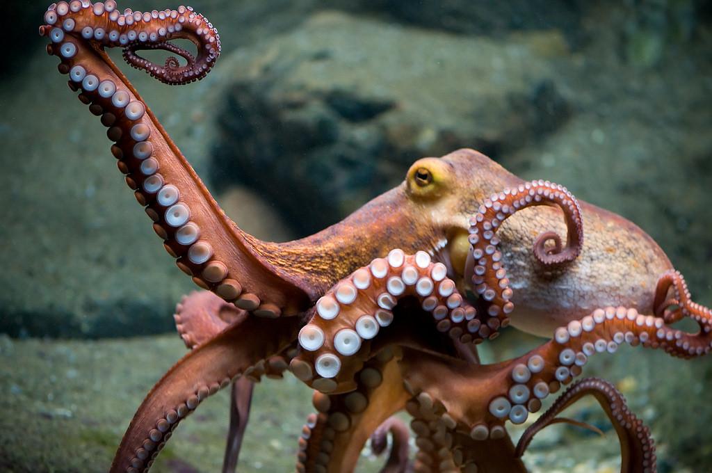 A dancing octopus