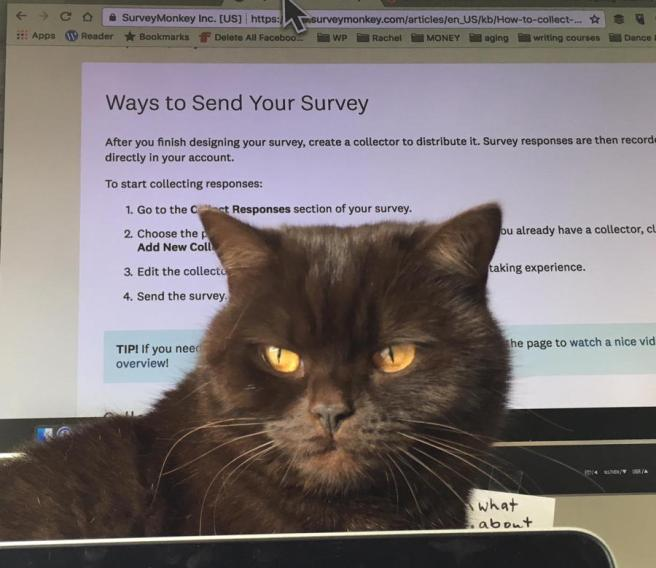 cat-and-survey.jpg