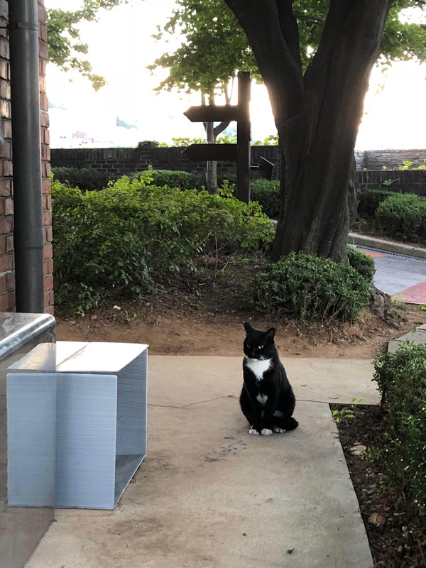 Black and white cat in the grounds of Seoul Art Space—Yeonhui