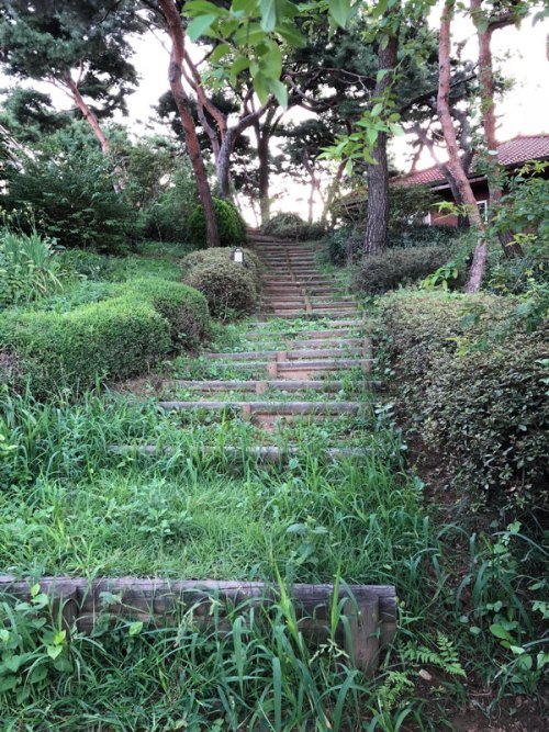 Steps in the wild gardens of Seoul Art Space—Yeonhui