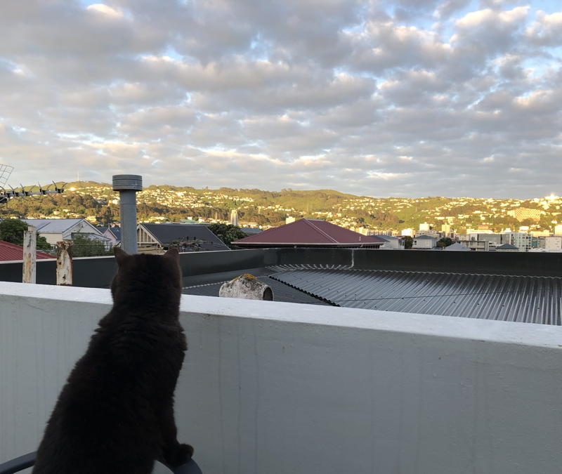 Cat looking out at a city in sunshine
