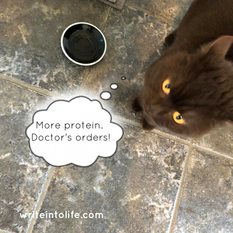 Empty plate, cat glaring. Thinks: More protein. Doctor's orders!