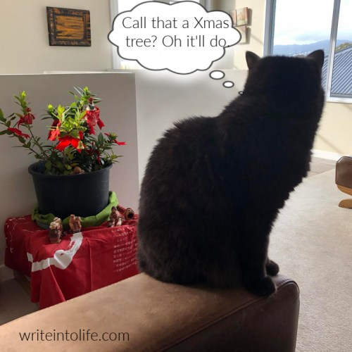 Cat viewing a tiny Christmas tree thinks, Call that a Xmas tree? Oh it'll do.