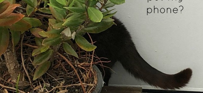 Cat searching behind a pot plant. Text Where did I put my phone? and writeintolife