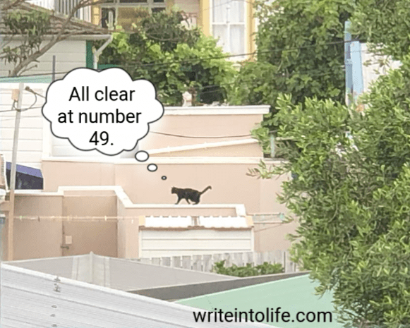 """A black cat walking along a fence top between houses and thinking, """"All clear at number 49."""""""