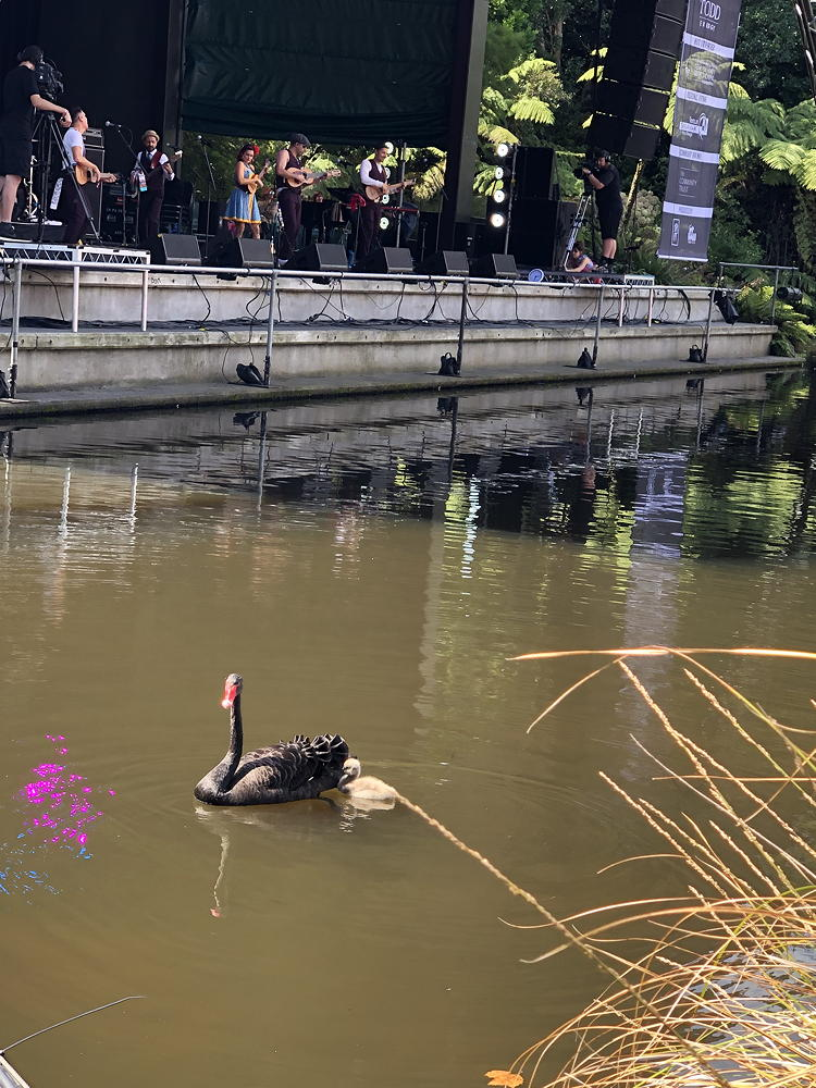 womad-SWAN2