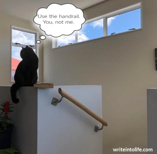cat-handrail.png