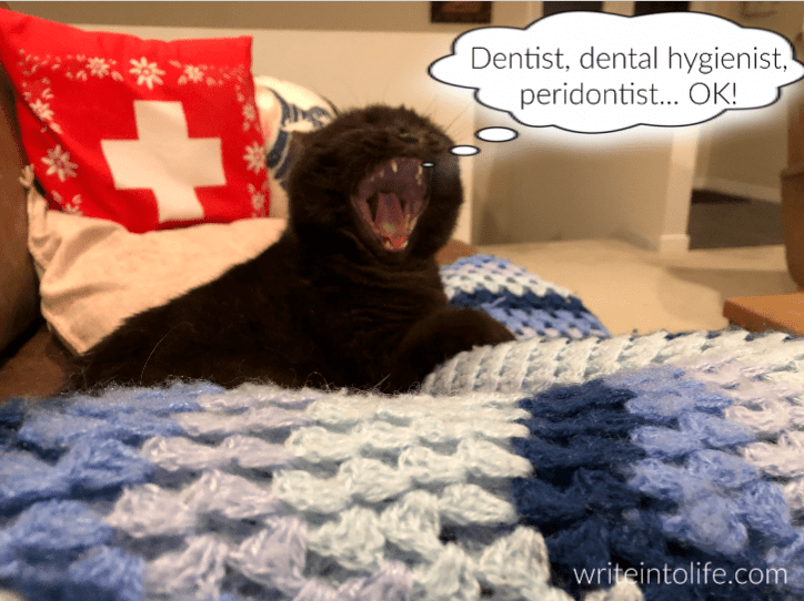 A cat on a blanket opens her mouth wide and thinks, Dentist, dental hygienist, peridontist... OK