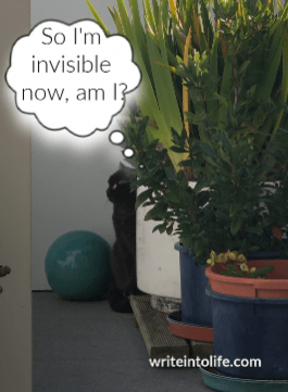 Cat hiding behind plants thinks So I'm invisible now am I?