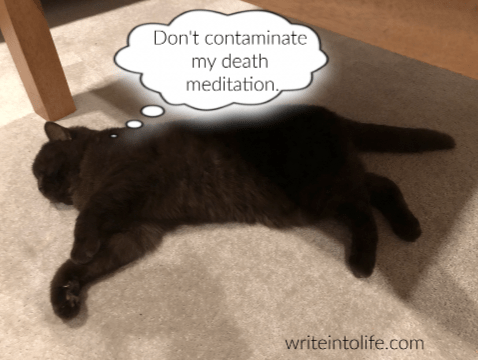 Cat lying on the floor thinks, Don't contaminate my death meditation