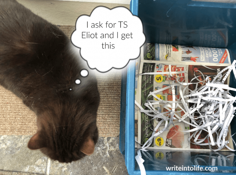 Cat rejecting litter of supermarket flyers and shredded documents. I ask for TS Eliot and I get this.